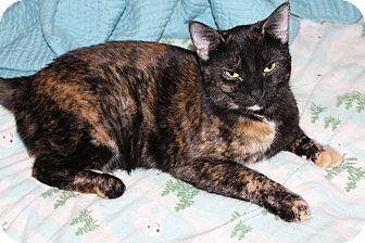 Domestic Shorthair Cat for adoption in Marietta, Georgia - Pantene