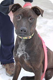 Labrador Retriever Mix Dog for adoption in Waldorf, Maryland - Cocao