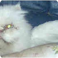 Adopt A Pet :: Simone - Jacksonville, FL