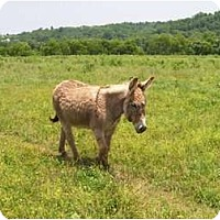 Adopt A Pet :: Phil - Lyles, TN
