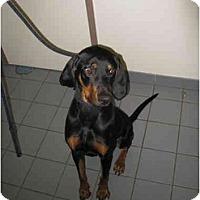 Adopt A Pet :: Kingston - Surrey, BC