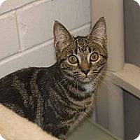 Adopt A Pet :: Emma - New Port Richey, FL