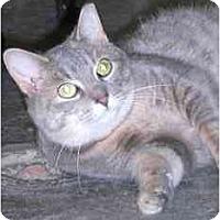 Adopt A Pet :: River Wave - Lombard, IL