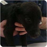 Adopt A Pet :: Jennifer - Phoenix, AZ