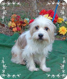 Petit Basset Griffon Vendeen Mix Dog for adoption in Marietta, Georgia - ISAIAH