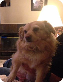 Chihuahua Mix Dog for adoption in Fallbrook, California - Alexis