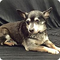 Adopt A Pet :: Tobi - Encino, CA