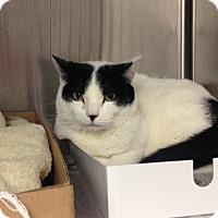 Adopt A Pet :: Chanel - East Brunswick, NJ