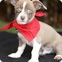 Adopt A Pet :: Charlie - Rancho Palos Verdes, CA
