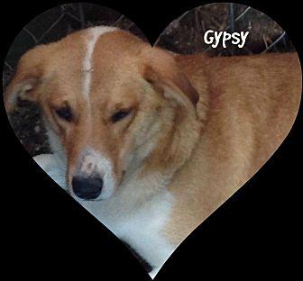 Beagle/Labrador Retriever Mix Dog for adoption in Princeton, West Virginia - Gypsy
