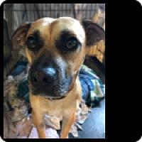 Adopt A Pet :: Gordo - Fallbrook, CA