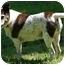 Photo 1 - Terrier (Unknown Type, Medium) Mix Dog for adoption in Wake Forest, North Carolina - Junebug