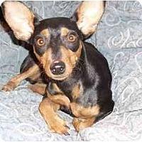 Adopt A Pet :: KC - Phoenix, AZ