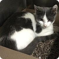 Adopt A Pet :: Marielle - New York, NY