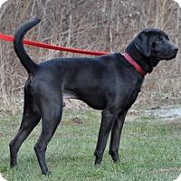 Adopt A Pet :: Donovan - Cincinnati, OH