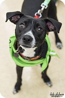 Terrier (Unknown Type, Medium) Mix Dog for adoption in Charlotte, North Carolina - Lorelai