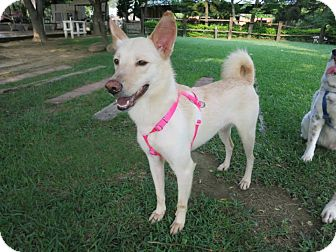 Shepherd (Unknown Type) Mix Dog for adoption in Sunnyvale, California - Noble