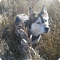 Adopt A Pet :: Apache - Egremont, AB