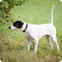 Adopt A Pet :: Nash - Wood Dale, IL