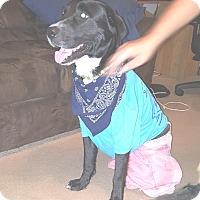 Adopt A Pet :: Clifford - Jesup, GA