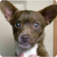 Adopt A Pet :: Pal - Harrison, AR