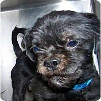 Adopt A Pet :: Woodrow - Phoenix, AZ