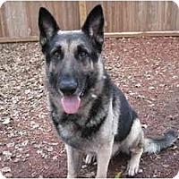 Adopt A Pet :: Falco - Green Cove Springs, FL