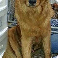 Adopt A Pet :: Myron - St Louis, MO