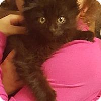 Adopt A Pet :: Lucy - Mount Clemens, MI