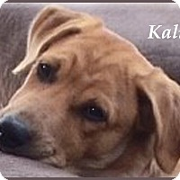 Adopt A Pet :: Kali- Super Sweet - Marlborough, MA