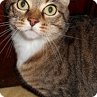 Adopt A Pet :: Blaire - Chattanooga, TN