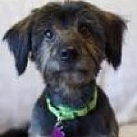 Adopt A Pet :: Kei - Canyon Country, CA