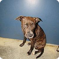 Adopt A Pet :: Baby - Henderson, NC
