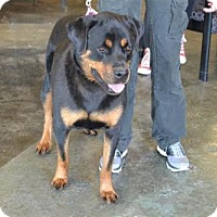 Adopt A Pet :: Kayla - Rockwall, TX