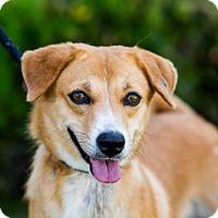 Adopt A Pet :: Duchess - San Diego, CA
