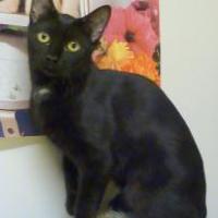 Adopt A Pet :: Victoria - Westville, IN