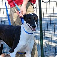 Adopt A Pet :: Kai - Santa Rosa, CA