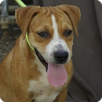 Adopt A Pet :: Breezy - Mayflower, AR