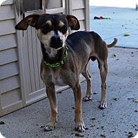 Adopt A Pet :: Wallace - Kalamazoo, MI