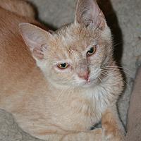 Adopt A Pet :: Blossom - Attalla, AL