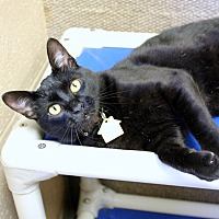 Adopt A Pet :: Mamba - Germantown, TN