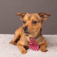 Adopt A Pet :: Paulie Peanuts - Salem, OR
