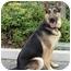 Photo 1 - German Shepherd Dog Dog for adoption in Los Angeles, California - Fargo von Frankfurt