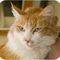 Adopt A Pet :: Neptune - Arlington, VA