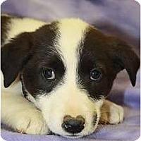 Adopt A Pet :: Elm - Broomfield, CO