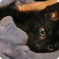 Adopt A Pet :: Bindi - Port Republic, MD