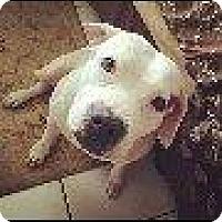 Adopt A Pet :: Princess Girl - Coral Springs, FL