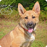 Adopt A Pet :: Georgia - Fort Valley, GA