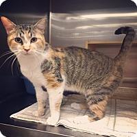 Adopt A Pet :: Jasmine - Raleigh, NC