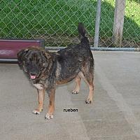Adopt A Pet :: Reuben - Grenada, MS